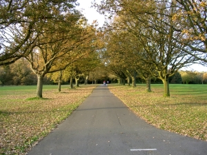 coronation-avenue-north-southampton-common-24021